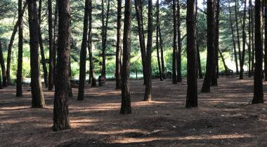 Çiftmazı Tabiat Parkı