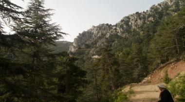 Isparta Kapıderesi Toros Sediri - 1 Tabiat Anıtı (Çıkarıldı)