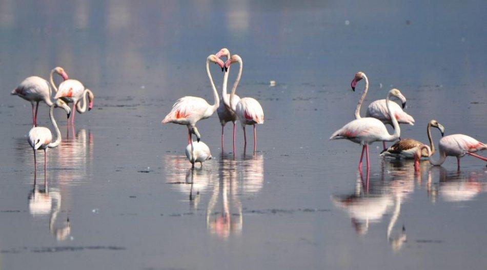 Yalova Kuş Gözlem Noktaları ve Hersek Lagünü Gözlem Noktası